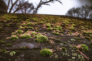 Moss-Removal-Issaquah-WA