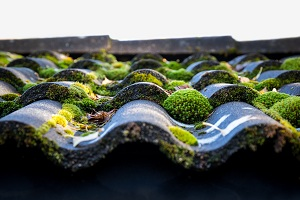 Roof-Moss-Removal-Issaquah-WA